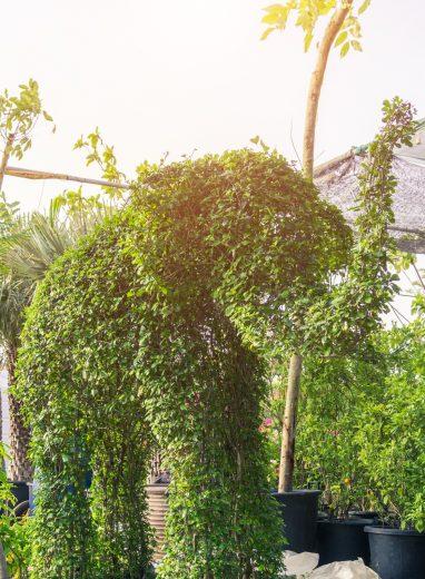 Animal Topiary 2