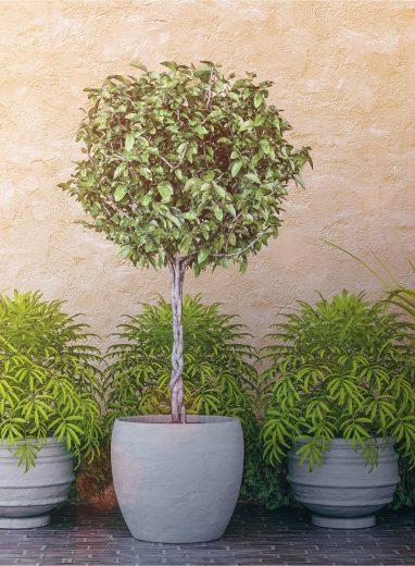 Spherical Topiary 2